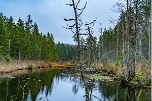 Looduse loomingu tuur Järvamaal - Võlingi