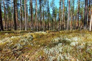 Metsa matkarada