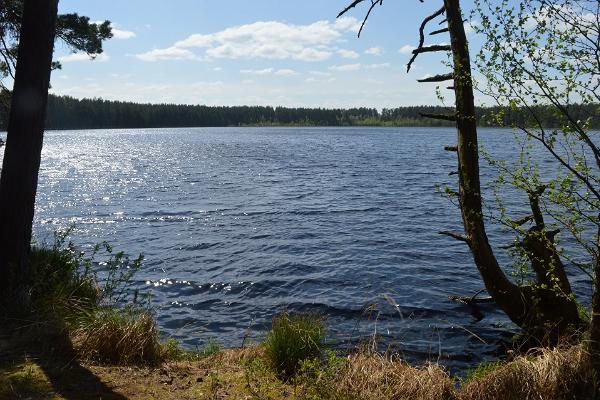 Beautiful bog lake