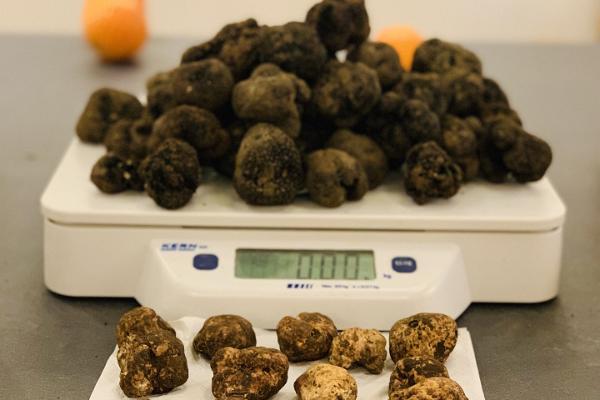 Italian food and culture workshops, truffles