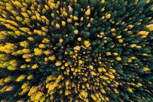 Loodustuur: Tallinnast Tartusse läbi Kõrvemaa metsade: Varasügisene mets