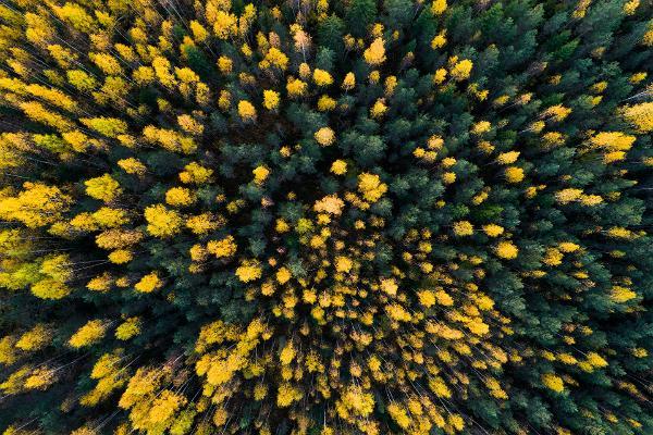 Экскурсия на природе: из Таллинна в Тарту через леса Кырвемаа: лес ранней осенью