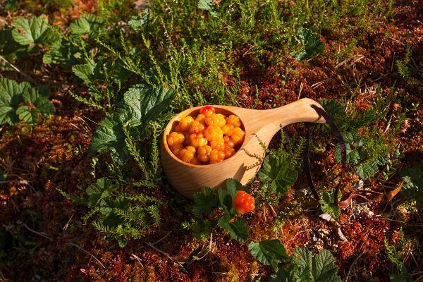 Экскурсия на природе: из Таллинна в Тарту через леса Кырвемаа: собирание морошки