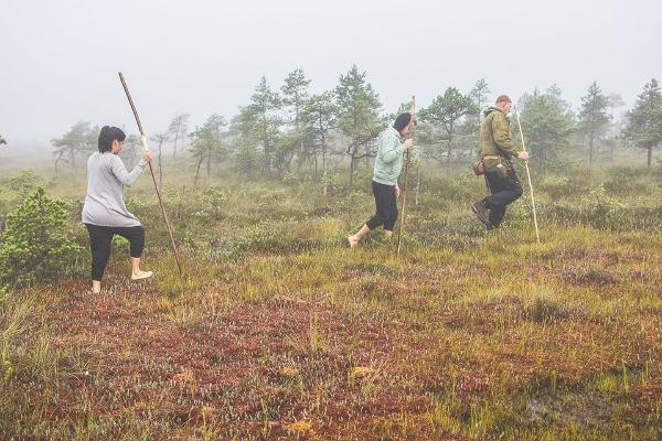 Экскурсия на природе: из Таллинна в Тарту через леса Кырвемаа: заповедник Эндла