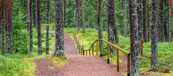 Mida kujutab endast Metsa matkarada?