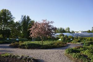 Коллекционный сад Ряпинаской садоводческой школы