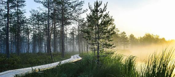 6 elamussoovitust Lõuna-Eestis
