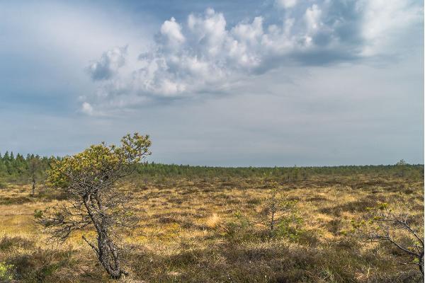 Vētsas dabas rezervāta pārgājienu taka