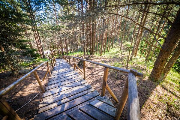 Wooden hiking trail, pine forest