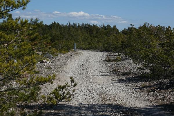 Rocky beach, juniper trees