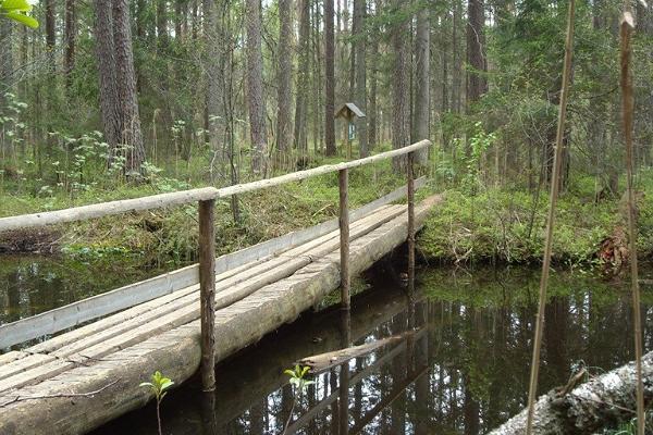 Saare Lake study trail