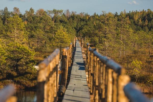 Das Moor im Endla-Naturschutzgebiet