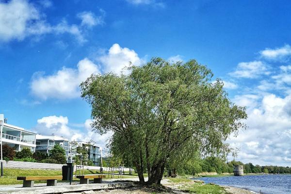 Pērnavas upes labā krasta veselības sporta taka jeb Jānsona taka