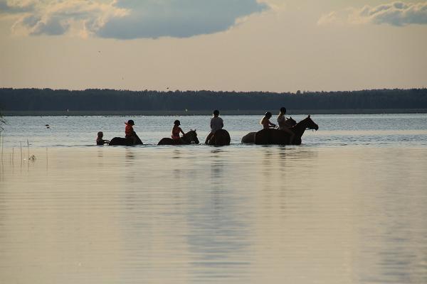 Tamme Tallin lomatalo - uinti hevosten kanssa Võrtsjärvessä
