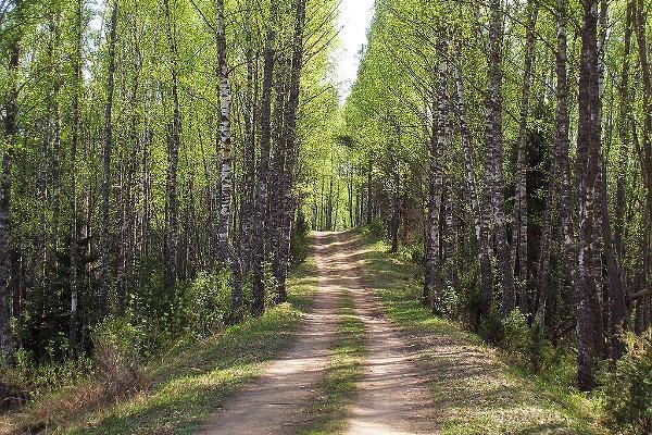 Wanderweg Järvi-Aegviidu (27 km)