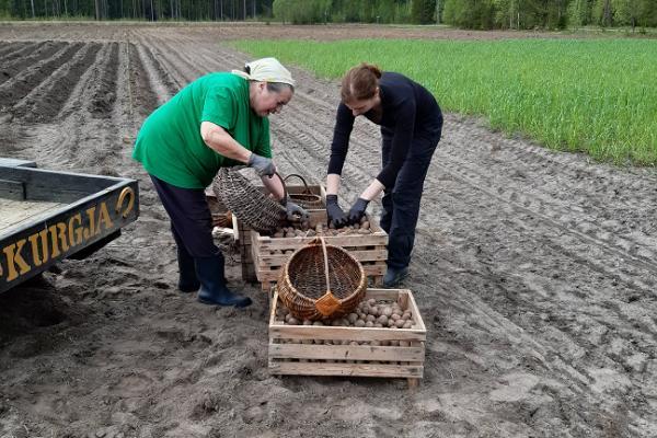 """Programm des Bauernhofmuseums C. R. Jakobson """"Nahrung auf dem estnischen Bauernhof über das ganze Jahr hindurch"""""""