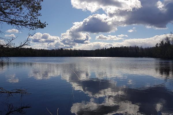 Mustjärv Kurtna järvestikus