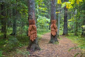 "Väike Väerada - ""Väe käed"" - metsän voiman tuntemispaikka"
