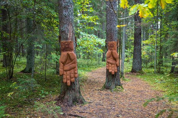 """Väike Väerada (Lilla Kraftled) - """"Kraftens händer"""" - stället där man kan känna skogens kraft"""