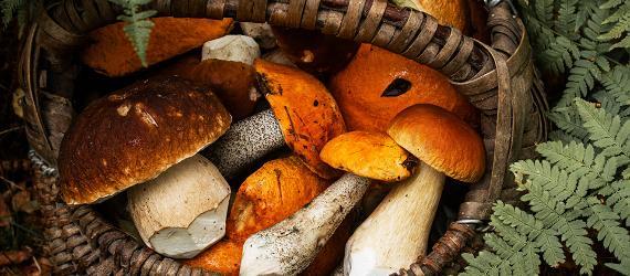 Где собирать грибы и ягоды в Эстонии?
