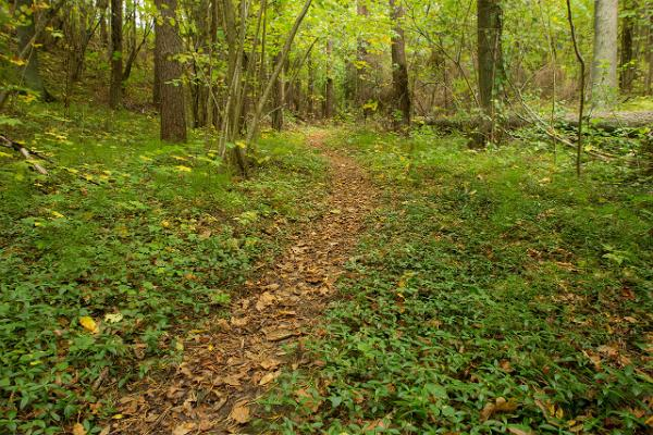 Apteekrimäen metsäpolku