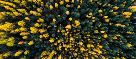 «Зеленые» путешествия по Эстонии