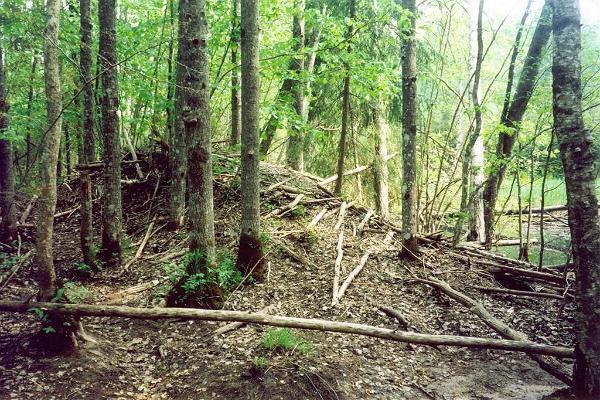 Lemmjē meža mācību taka