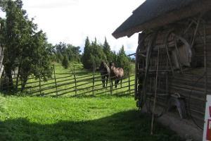 Ferienhaus des Bauernhofs Nina