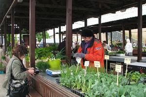 Viljandi marknad