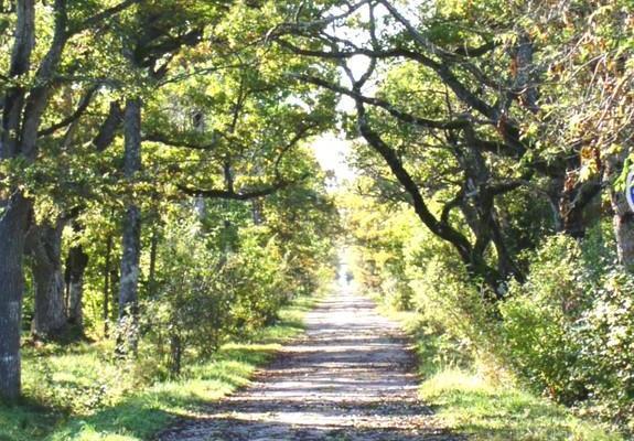 Природная и учебная тропа дубравы Лооде