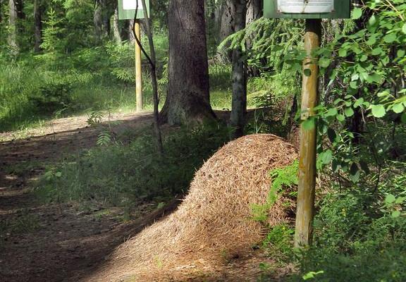 Ants' path of Kiidjärve