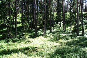 Природная тропа в лесу Оанду