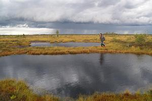 Cranberry hike in Soomaa bogs