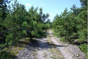 Природная тропа Лоона-Харилайу