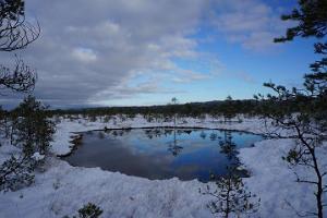 Snöskovandring på myren Kõnnu Suursoo