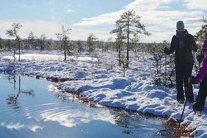 Pārgājiens gida pavadībā ar sniega kurpēm Koitjerves purvā