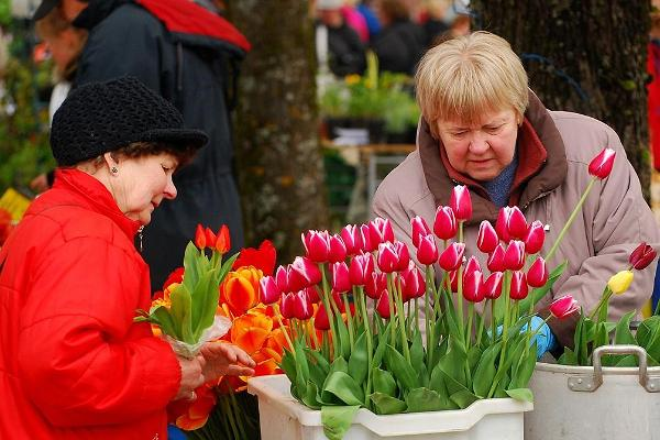 Blumenmarkt in Türi