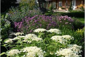 Sadeväljan puutarhatila