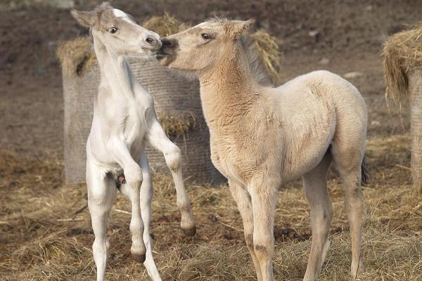 Tihusen hevostila
