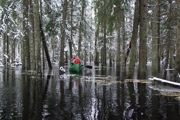 Kanuwanderungen auf dem Überflutungsgebiet im Nationalpark Soomaa