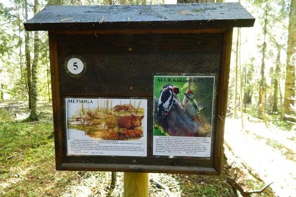 A nature study trail in the southernmost point of Estonia