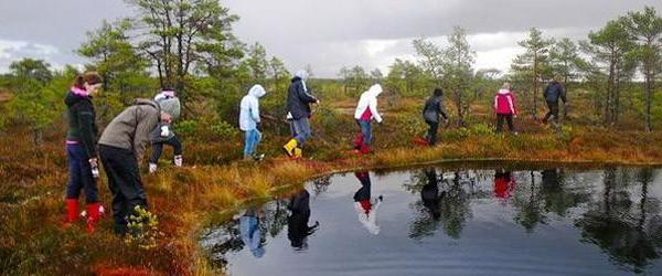 Bog-shoeing in northern Kõrvemaa